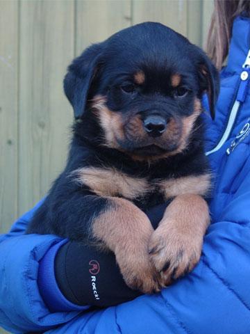 Puppy op arm Laarbeekhoeve